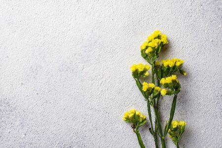 Yellow Limonium flower on white background