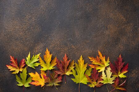 Autumn background with colorful maple leaves. Top view