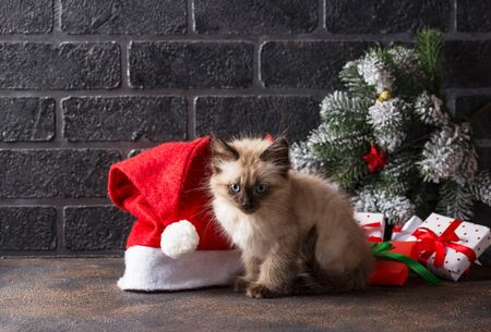 Funny little kitten near Santa hat and gift boxes. Christmas card Stock fotó