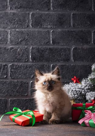 Funny little kitten near gift boxes and tree. Christmas card