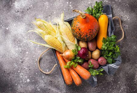 Various autumn vegetables. Pumpkin, carrot, potato and corn. Harvest concept