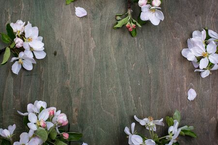 Blooming apple tree. Spring background on green wooden table