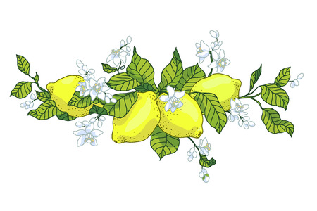 Lemon tree in tattoo style image. Light little flowers with fruits on the branch horizontal orientation. Illustration