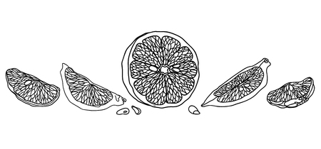 Lemon line illustration made in vintage pet style. There are fruits, wedges and halves of lemons with seeds. Vettoriali