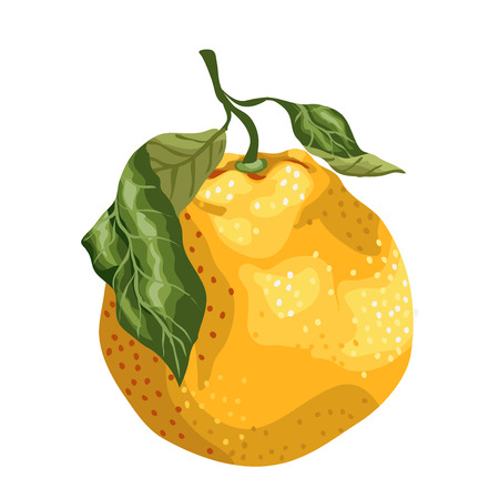 Orange fruit made in graphic design on the branch with leaves. Vector illustration.