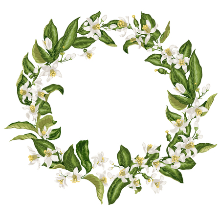Wreath with citrus flowers in shape of a circle with limon, mandarin, lime and orange flowers, leaves, tiny fruits and buds.