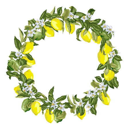 Citrus wreath in vector graphic with blooming flowers and branches with fruits and leaves. There are yellow and green fruits of lemon tree Ilustrace