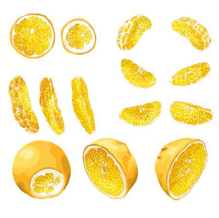 Big set with citrus fruit slices of different shapes such as circles, halves, 6 standart size slices and 3 long size bright slices. There are 14 elements made in realistic vector drawing style design