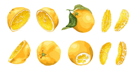 Set with citrus fruit and slices of different shapes such as  halves and 4 long size bright slices. There are 10 elements made in realistic vector drawing style design