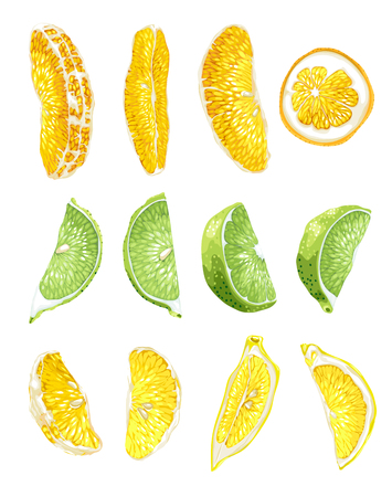 Fruit set with lime, orange and lemon slices in 2 variants in realistic vector graphic illustration in bright colors
