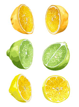 Fruit set with lime, orange and lemon in halves in 2 variants in realistic vector graphic illustration in bright colors