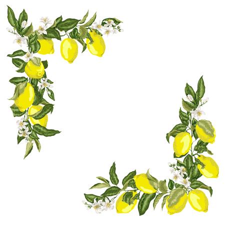 Ensemble de modèle de cadre carré d'angle avec fleur de citron d'agrumes et fruits en illustration vectorielle