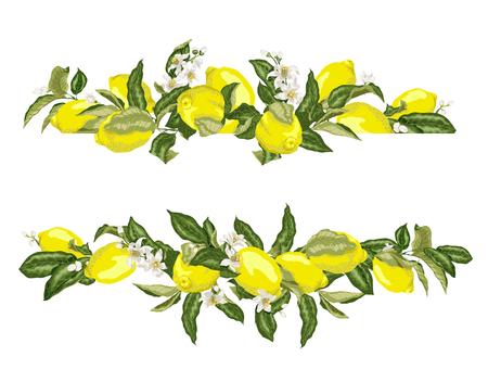 Kalkschablonenrahmengrenze mit Zitrusfrüchten und -blumen auf den Zweigen in der grafischen Vektorillustration im realistischen Entwurf