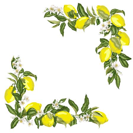 Set di modello di cornice quadrata angolare con fiori di limone e agrumi e frutta in illustrazione vettoriale Vettoriali