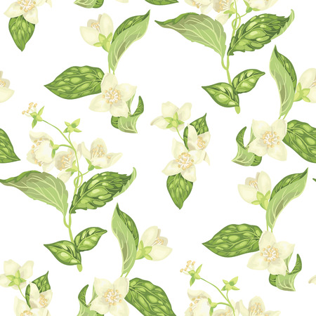 Seamless pattern with jasmine branches with flowers in realistic graphic vector illustration Illustration