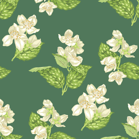 Jasmine flowers on branches in seamless pattern in realistic graphic vector illustration