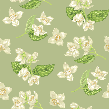 Seamless pattern with jasmine flowers in realistic graphic vector illustration with branches with flowers and leaves