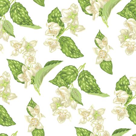 Jasmin blüht nahtloses Muster in realistischer grafischer Vektorillustration mit Niederlassungen mit Blumen und Blättern Vektorgrafik