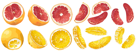 Set with fruits and fruit parts of grapefruit and orange in vector realistic graphic illsutration
