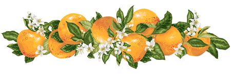 Elemento de decoración de titular de vector con ramas de cítricos de pomelo en ilustración de diseño gráfico realista Ilustración de vector
