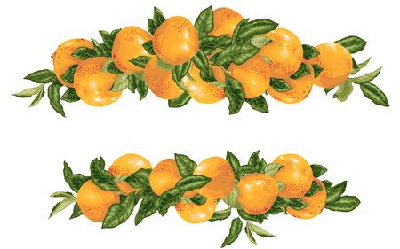 Vector headline decor elementwith grapefruit citrus branches in realistic graphic design illustration