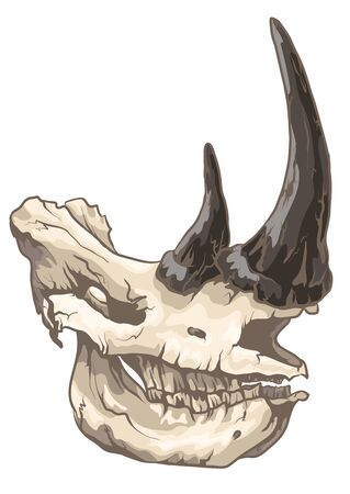 Graphic rhino skull with shadows in realistic colors