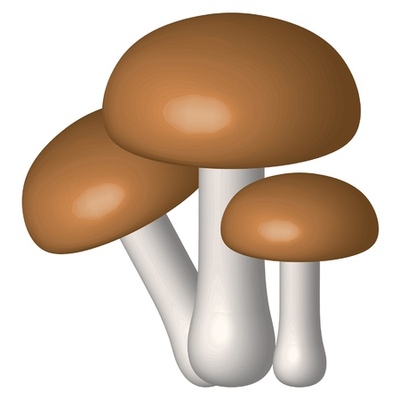Vector illustration of three mushrooms  Stock Vector - 12358080
