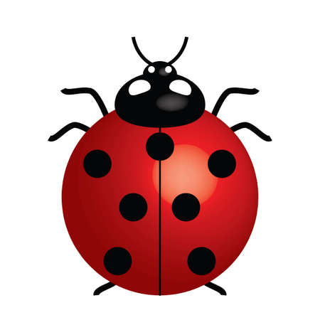 Vector illustration of ladybird (symbol of good luck) 矢量图像