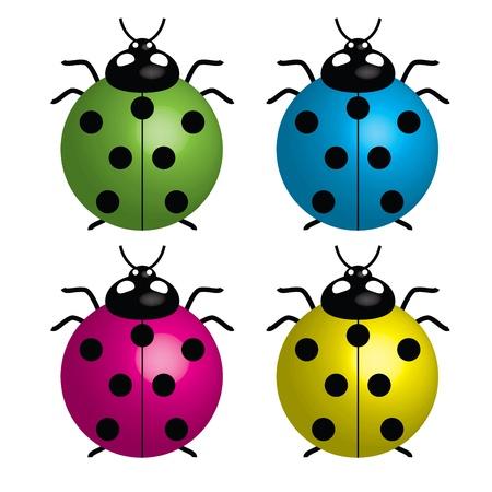 beetle: illustration of ladybirds  symbol of good luck
