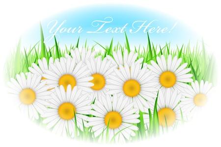 illustration of daisy flowers