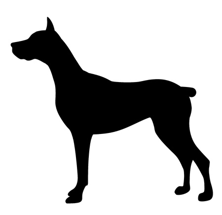 labrador retriever: illustration of dog