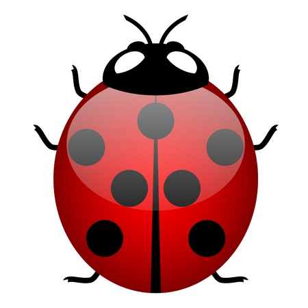cartoon bug: Illustration of ladybird (symbol of good luck) Illustration