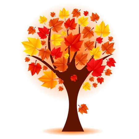 autumn trees: Vector illustration of autumn tree Illustration