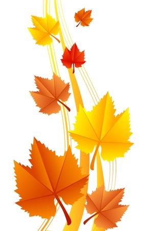 Illustration der Blätter