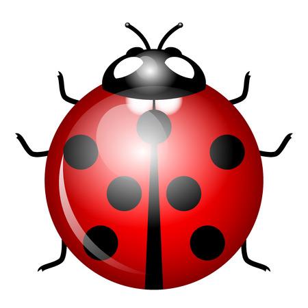 escarabajo: Ilustración del vector del símbolo de la mariquita de la buena suerte