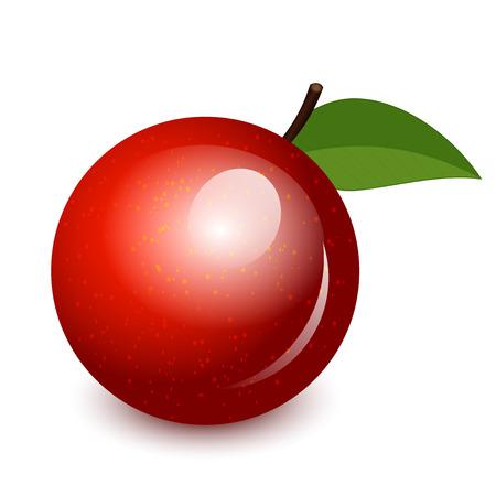 fruit clipart: Vector illustration of shiny apple