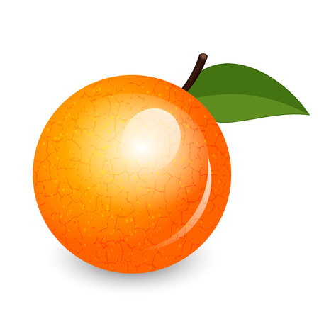 apple isolated: Vector illustration of shiny orange Illustration