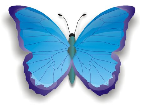 illustration of blue butterfly illustration