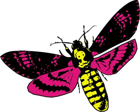 illustration of night butterfly in color illustration