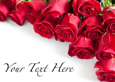 mujer con rosas: Rosas rojas sobre fondo blanco Foto de archivo