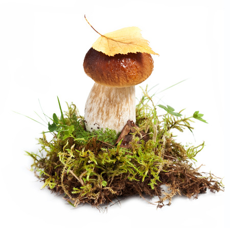 capped: Brown capped mushroom isolated on white