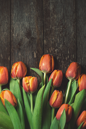 Red tulips on rustic wooden background