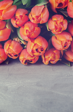 Red tulips on stone background Stock Photo