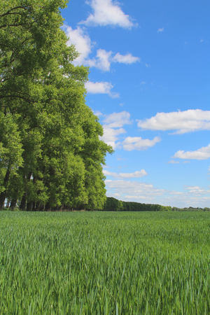 boundless: Green grass and trees. Spring in the countryside