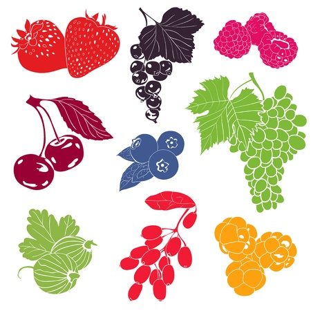 Berries vector collection, colorful illustration Stock Illustratie