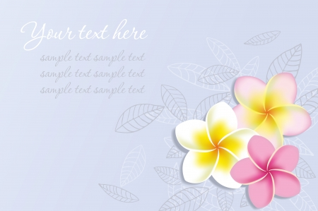 plumeria on a white background: Background with frangipani flowers  Vector illustration