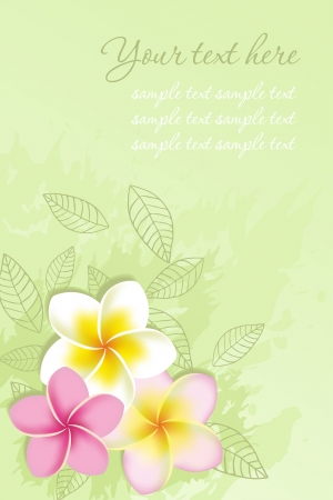 Background with frangipani flowers  Vector illustration  Vector