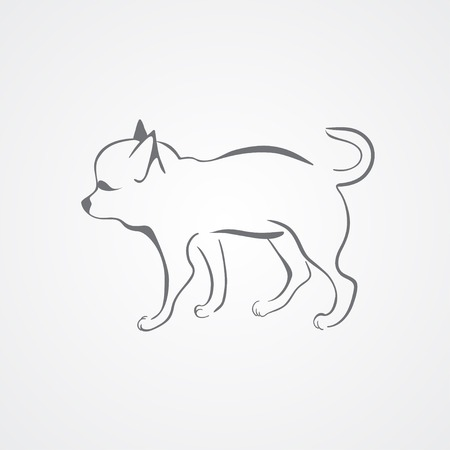 chihuahua dog: Chihuahua dog isolated on a white background