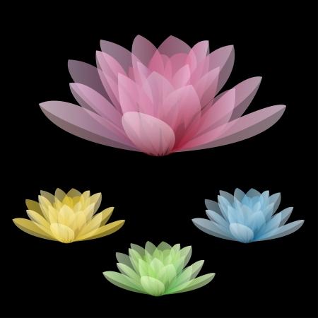 flor aislada: Flores de loto aisladas sobre un fondo negro Ilustraci�n vectorial Vectores