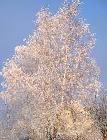 Winter tree under snow on a blue sky background photo